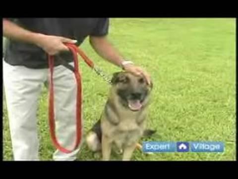 Temel Köpek Eğitim Teknikleri: Senin Köpek Eğitim Sırasında Rahat Yapıyor