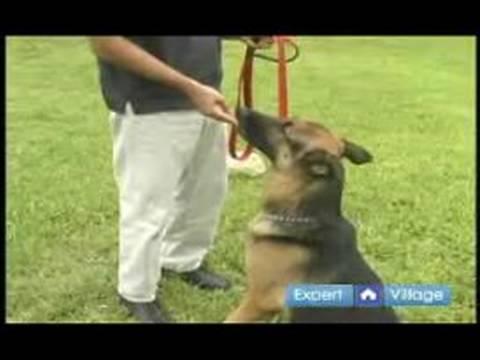 Temel Köpek Eğitim Teknikleri: Senin Köpek Motive Etmek İçin İpuçları