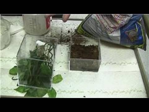 Kurbağa Bir Ortam Yapmak İçin Nasıl Kurbağa Bakımı :