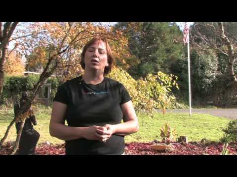 Bahçe: Kovucu Haşere : Ev Püskürtmek İçin Nasıl Uçar