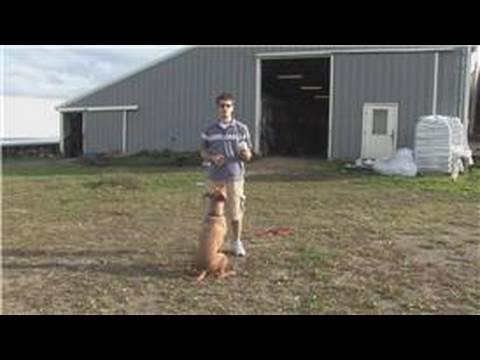 Bir Top İle Yakalamak Oynamak İçin Bir Köpek Öğretmek İçin Nasıl Köpek Eğitim İpuçları :