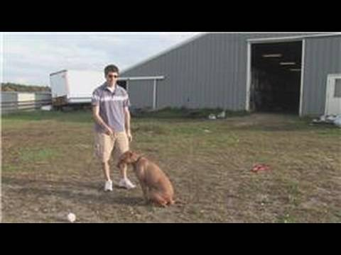 Dur Ve Bekle Bir Köpek Eğitmek İçin Nasıl Köpek Eğitim İpuçları :