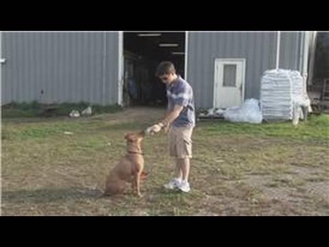 Yakalamak İçin Bir Köpek Eğitmek İçin Nasıl Köpek Eğitim İpuçları :