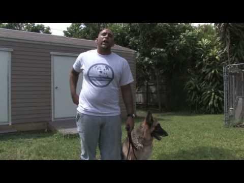 Eğitim İpuçları Köpek: Köpeğinizin Aşır Kabuk Durdurmak Nasıl