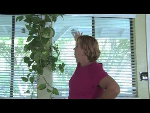 Asılı Kapalı Bitkiler Büyümek İçin Ne Kadar Bitki Bakımı İpuçları :