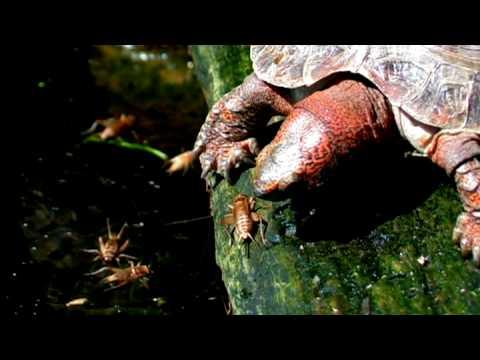 Evde Beslenen Hayvan Kaplumbağa: Kaplumbağa Gıda Gerçekler