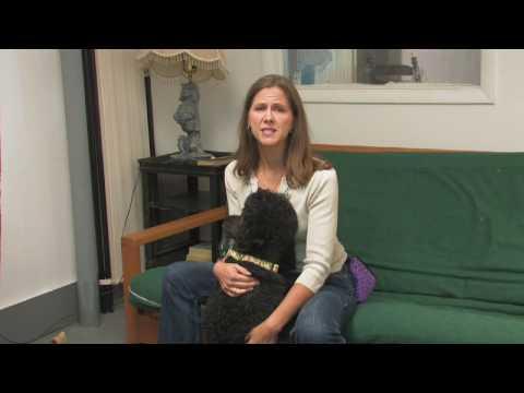 Köpek Eğitimi : Kurtarma Köpeği Eğitimi