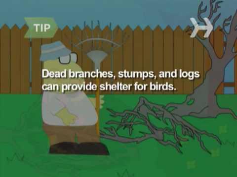 Nasıl Bir Kuş Cenneti Bahçende Yapmak