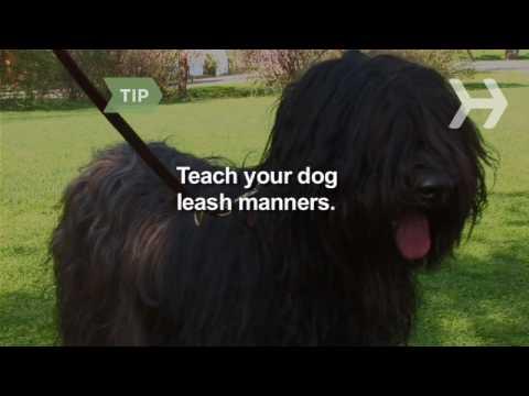 Nasıl-E Doğru Yürümek Senin Köpek
