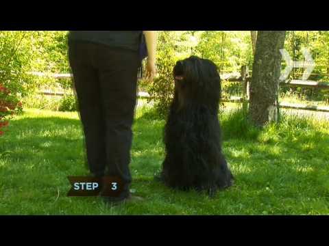 Nasıl Kalmak İçin Senin Köpek Öğretmek