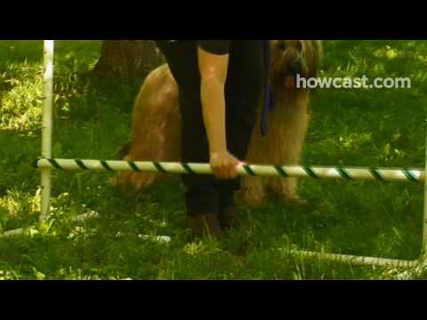Nasıl Öğretmek Senin Köpek Atlamak İçin