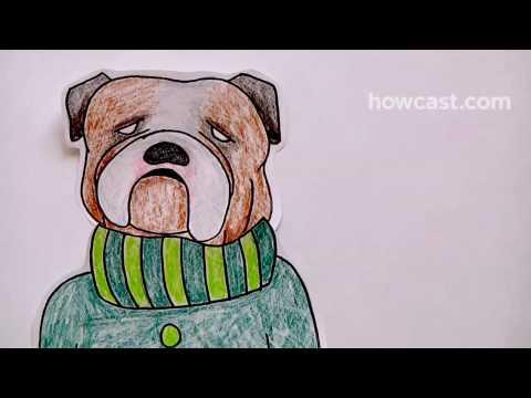 Nasıl Senin Köpek Onun Vücut Tipine Göre Elbise