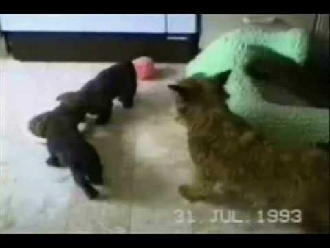 Komik Video Derleme, Komik Bebekler, Komik Hayvanlar, Komik Spor Yumruklar