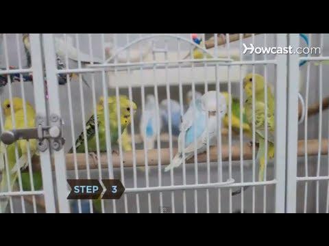 Nasıl Bir Kuş Kafesi Seçmek İçin