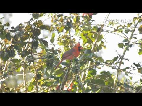 Kuşlar Ve Kelebekler Senin Backyard İçin Çekmek İçin Nasıl