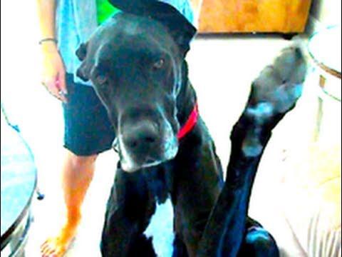Köpeğimi El Sallar Mısın!
