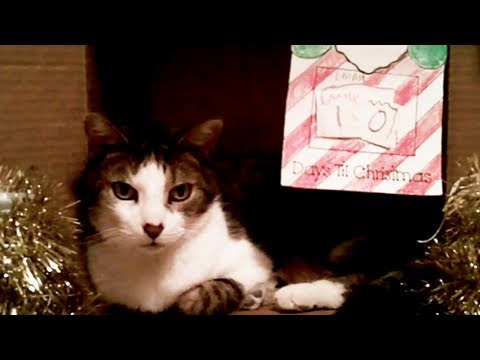 Kokulu Kedi Noel İçin Sarılmak!