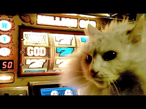 Casino Kitty Sayısı Jackpot!