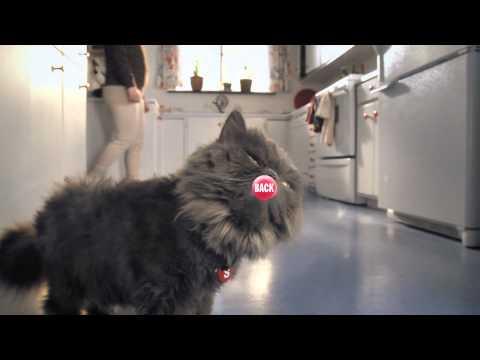 Skittles Touch: Kedi