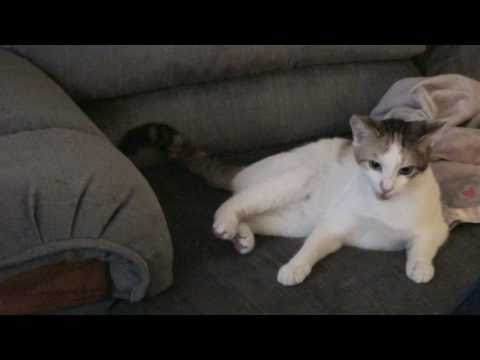 Benim Büyük, Büyük, Kitty Kat!