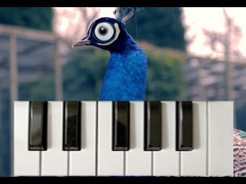 Tavus Kuşu Piyano Etkileşimli