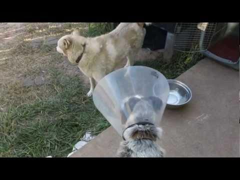 Köpek, Hayata Geri Dönüyor!!! 7/22/2011