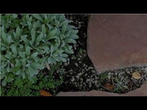 Bahçe İpuçları: Nasıl Karıncalar, Çiçek Bahçeleri Dışında Tutmak İçin