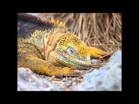 Galapagos Calendar.wmv