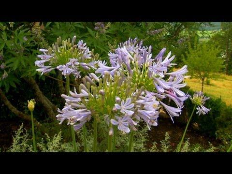 Renk Uyum İçinde Bahçe | S. Allen Smith Klasikleri