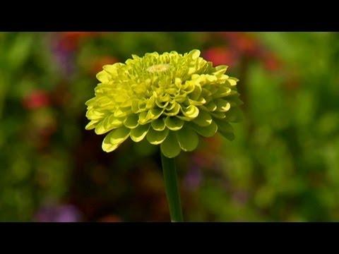 Tohumlarından Annuals Dikim | S. Allen Smith Klasikleri