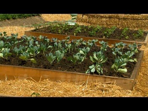 8 X 8 Bitki Nasıl Bahçe Yataklar Yükseltilmiş | S. Allen Smith Klasikleri