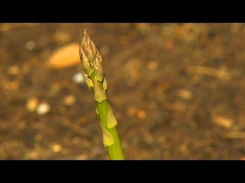 Hepsi Orada Kuşkonmaz Bitkiler Hakkında Bilmeniz Gerekenler | S. Allen Smith Klasikleri