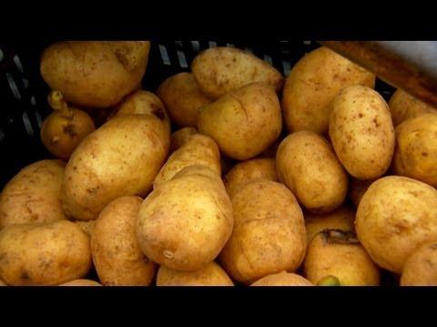 Nasıl Kesmek Ve Patates Bitki | S. Allen Smith Klasikleri
