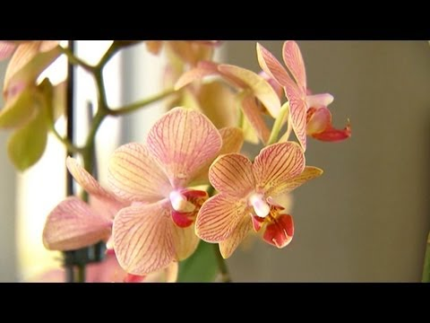 Orkide Nakli Nasıl | S. Allen Smith Klasikleri