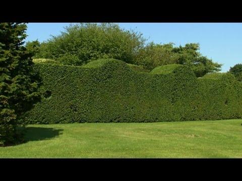 Privet Bahçeleri | S. Allen Smith Klasikleri