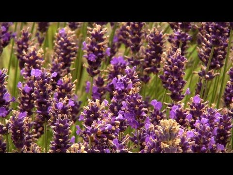Aromatik Lavanta Şömine | Evde Birlikte P. Allen Smith