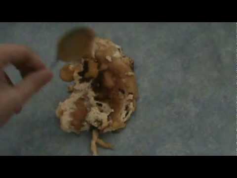 Nasıl Doğru Bir Şekilde Yanmış Bir Omlet Servis
