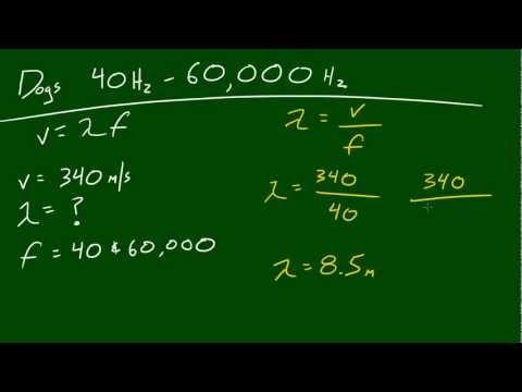Fizik Ders - 43 - Köpekler İçin Frekans Aralığı