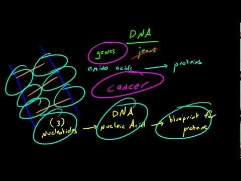 Biyoloji Ders - 13 - Dna