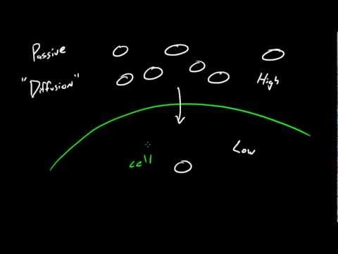 Biyoloji Ders - 18 - Difüzyon