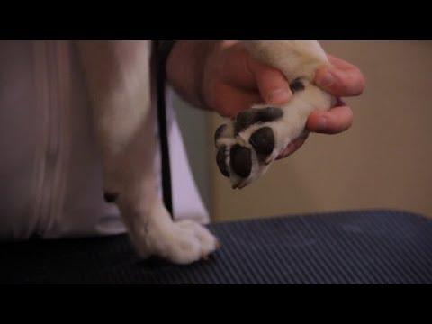 Nasıl Gerçekte Pembe, Tahriş Köpek Pençeleri: Evde Beslenen Hayvan Sağlık