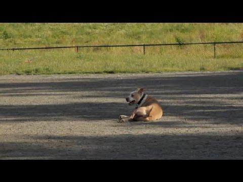 Köpek Yürüyüş Psikolojik Önemi: Evde Beslenen Hayvan Sağlık