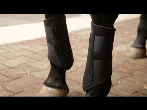 Fırçalama Bot Arasındaki Fark & Tendon Boots : Binicilik Bilgileri