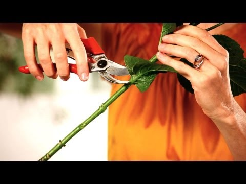 Nasıl Çiçek Düzenleme İçin Hazırlamak İçin | Düğün Çiçekleri