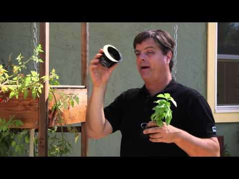 Nasıl Hidroponik Bitki Ekimi İçin : Hydroponic Bahçe