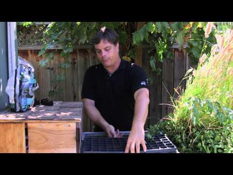 Nasıl Kendi Hydroponic Tohum Başlangıç Kurmak: Hydroponic Bahçe