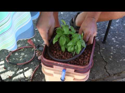 3 Sınıf Bilim Projeler Üzerinde Hydroponic Bahçe: Hydroponic Bahçe