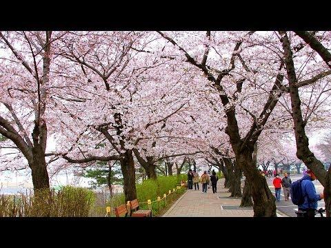 En İyi Zaman Ziyaret Etmek | Seul Seyahat