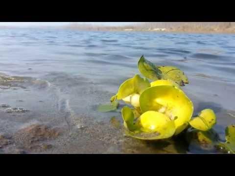Zihin Rahatlatıcı Müzik - Video - Intrumental