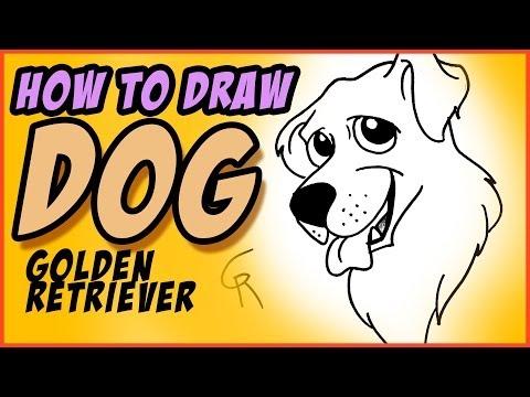 Nasıl Bir Köpek - Golden Retriever Çizim - Cc Beraberlik İçin